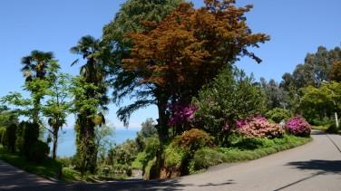 Batumi Botanical Garden - Adjara