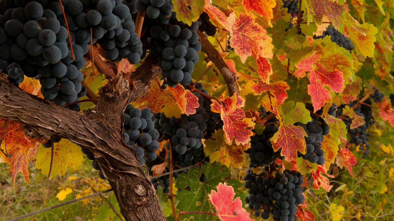 Wine birthplace - Georgian Qvevri Wine