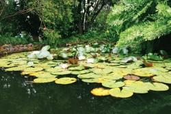 バトゥミ植物園