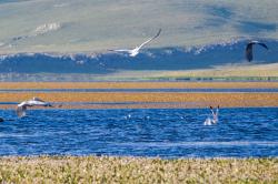Javakheti lakes