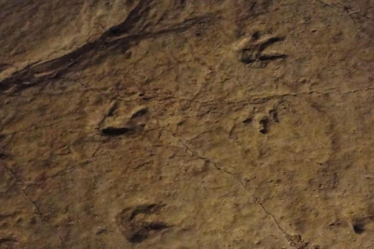 Sataflia Dinosaur Footprints